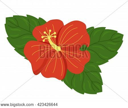 Red Hibiscus With Green Leaves Vector Illustration On White Background. Hawaiian Tropical Exotic Flo