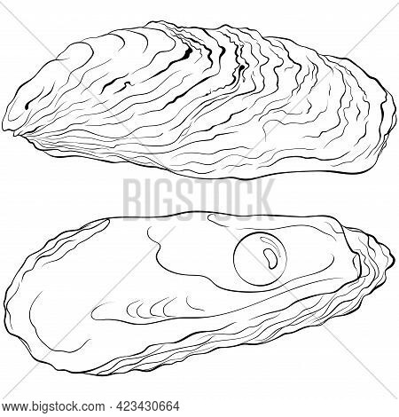 Oyster Shells With Pearl. Vector Hand Drawn Line Art Illustration Isolated On White. Elements For De