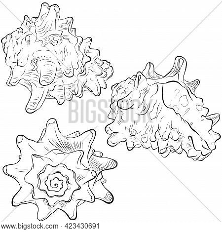 Spiral Spiked Seashell From Different Angles. Vector Hand Drawn Line Art Illustration Isolated On Wh
