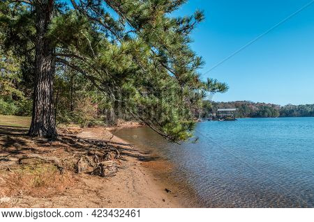 Along The Lake Shoreline A Large Pine Tree At The Beach Area With A Couple Of Floating Docks Full Of