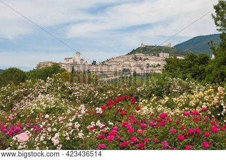 Panoramic View Of Assisi, The City Of The Peace With Beautiful Roses In Umbria