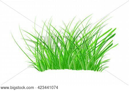 Tuft Of Grass Isolated On White Background. Spring Bush Of Fresh Grass. Green Thick Weed. Big Tussoc