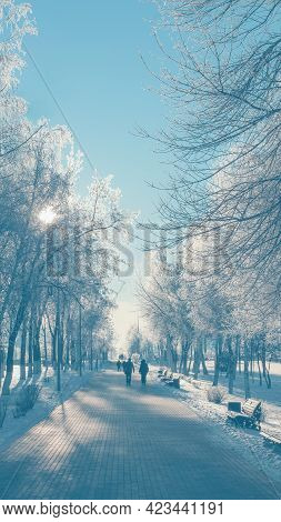Idyllic Winter Background In Light-blue Color With Snow-covered Park Lane And Trees Covered In Snow.