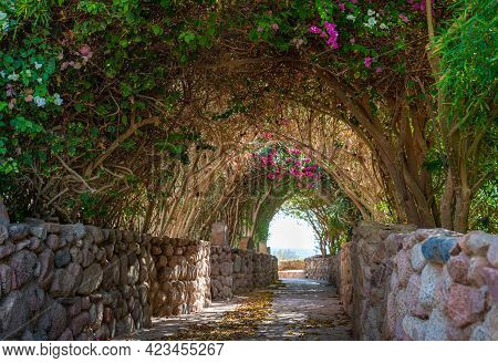 Arch Alley In Summer Garden. Beautiful Footpath In The Garden. Walk Way With Colorful Flowers And Tr