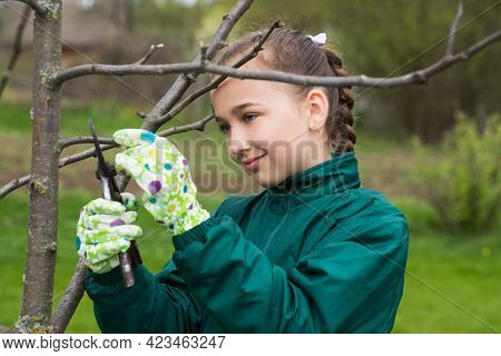 Active Russian Little Girl Gardener In Working Gloves Cuts Extra Branches Apple Tree With Secateurs