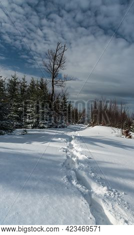 Winter Mountain Scenery With Snow Covered Hiking Trail, Forest And Sky With Beautiful Clouds Near Po