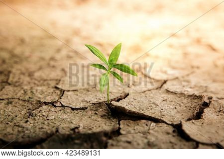 Recovery And Challenging In Life Or Business Concept.economic Crisis Symbol Or Ecology System.new Sp
