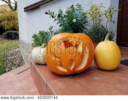 Halloween Cat Carved Pumpkin Cute Autumn Decoration