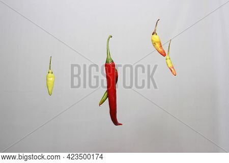 Collection Of Fresh Chilies Isolated On White Background. Various Kinds Of Chilies And Greens That A