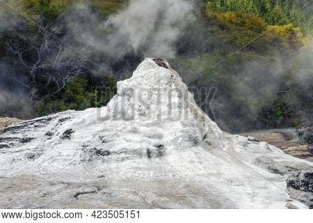 Lady Knox Geyser At A Geothermal Area Named Waiotapu In New Zealand