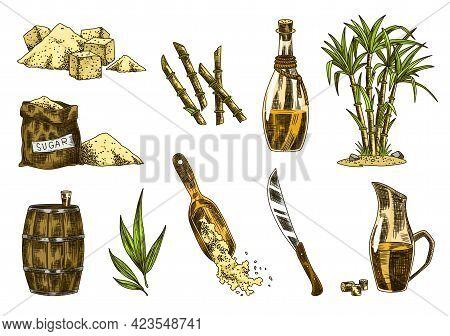 Cane Sugar. Set Of Product From Sugarcane Plants. Engraving Hand Drawn Natural Organic Food And Natu