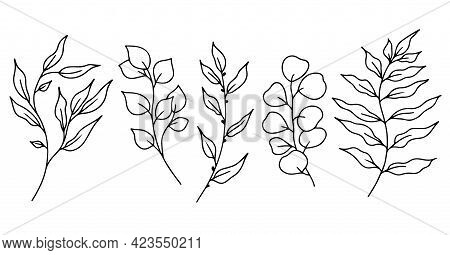 Eucalyptus Doodle Branch.set Of Plants And Tree Branches With Leaves And Berries. Hand Drawn Botanic