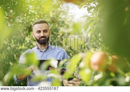Orchard Management, Seasonal Work And Crop Control On Organic Farm