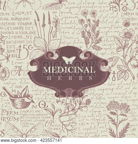 Vector Banner Or Label With The Words Medicinal Herbs. Hand-drawn Illustration In Retro Style With V