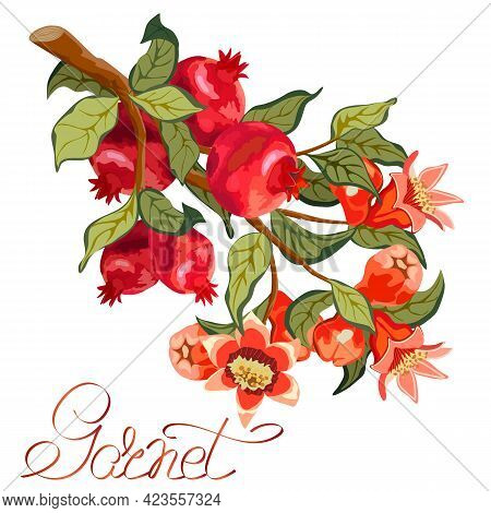 Pomegranate Branch In Color Illustration.branch With Pomegranates And Flowers On A White Background