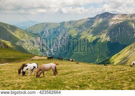 Portrait Of Grazing Wild Horses In The National Park Of Monti Sibillini, Frontignano, Marche, Italy