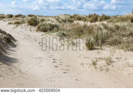 Trail Between Wild Grasses And White Sand In The Dutch Dune Reserve, Sunny Spring Day With A Blue Sk