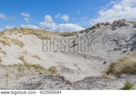 Hill In A Dutch Dune Reserve With White Sand With Dry Wild Grass, Spring Day With A Blue Sky With Wh