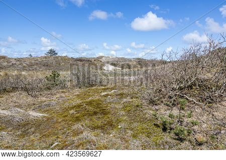 Hills In A Dune Reserve With White Sand, Wild Plants, Grass, Dry Heather And Few Trees, Spring Day W