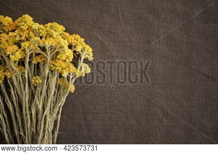 Helichrysum Arenarium Or Dwarf Everlast Immortelle Herb Al Flowers On Grey Linen Background With Cop