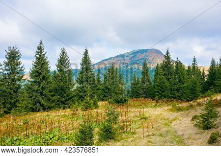 Mountain Landscape With Forest In Autumn. Beautiful Nature Background In The Morning. Wonderful View