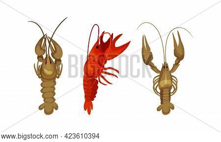 Lobster As Large Marine Crustacean With Muscular Tail And Claw Pair Vector Set