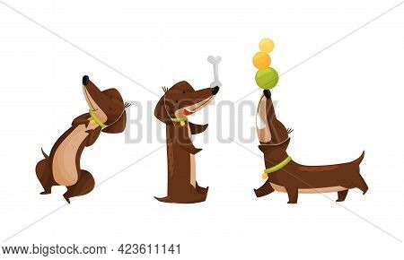 Cute Dachshund Character With Long Body And Collar Playing With Balls And Bone Vector Set