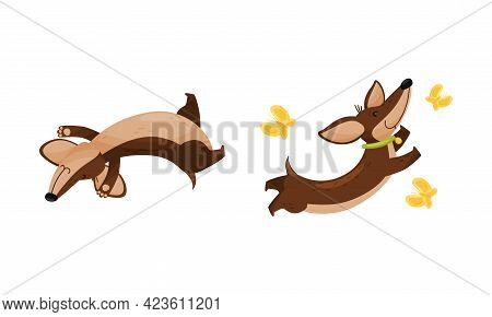 Cute Dachshund Character With Long Body And Collar Playing Chasing Butterfly And Rolling On Its Back