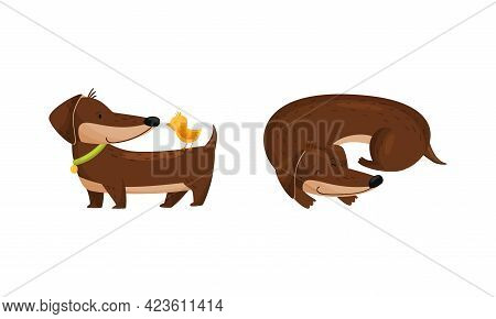 Cute Dachshund Character With Long Body And Collar Cuddling And Standing With Bird Vector Set