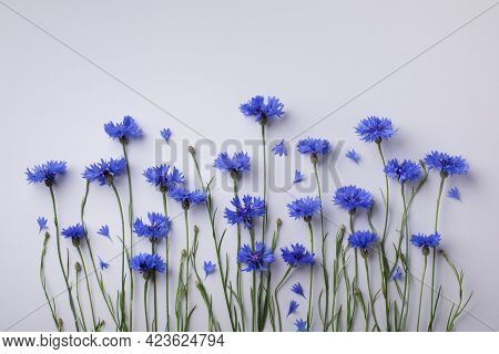 Vegetative Composition With Flower Of Blue Cornflowers In Flat Lay Style And Top View.