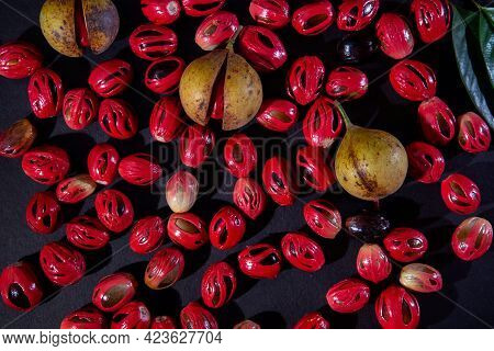 Nutmeg Seeds And Fruits In Dark Background, Nutmeg Fruits Photography Top View, Light And Shade Phot