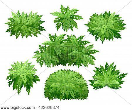 Green Shrubs. Nature Garden Natural Bushes, Wood Seasonal Greens, Outdoor Shrub Flora Foliage, Hedge