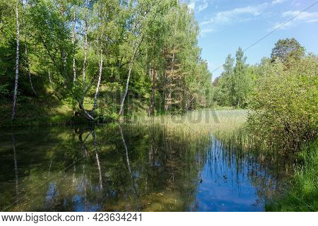 Small Shallow Lake Partly Overgrown With Reeds Among The Surrounding Forested Hills In Early Summer