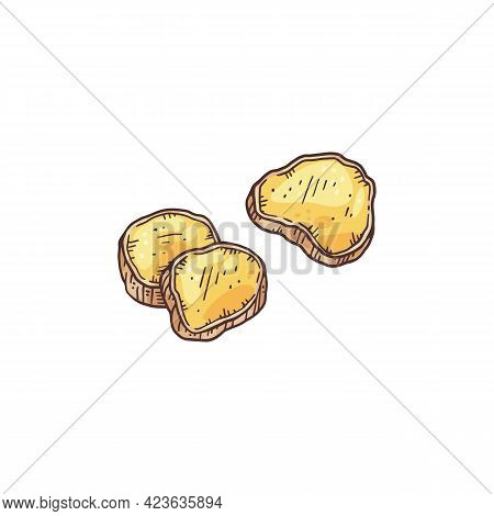 Pieces Of Sliced Ginger Root, Engraving Hand Drawn Vector Illustration Isolated.