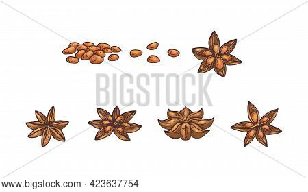 Anise Stars And Seeds Botanical Set Engraving Vector Illustration Isolated.