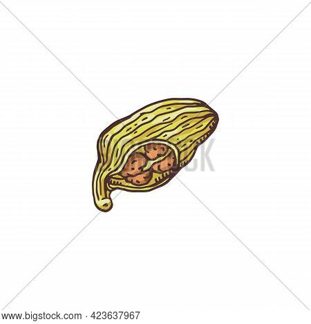 Cardamom Plant Pod Cut Open To Show Brown Seeds Inside