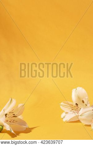 Background For Cosmetic Products Of Natural Color.