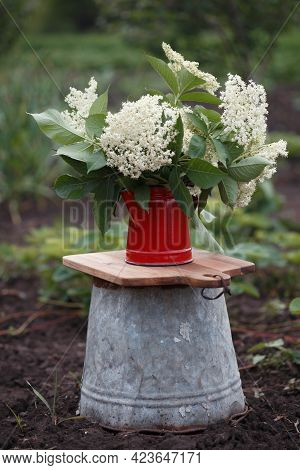 Bouquet With Elderberry Flowers In A Red Teapot