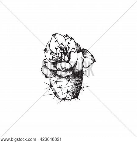 Exotic Wild Or Houseplant Prickly Desert Cactus With Flower A Vector Illustration