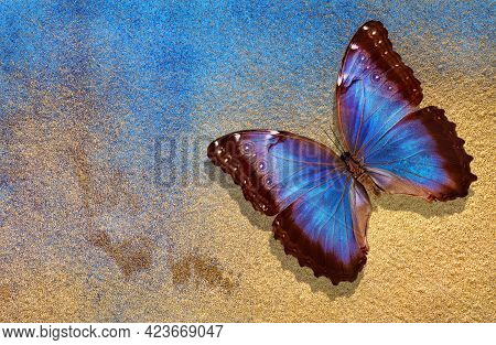 Gold And Blue Background. Watercolor Paper Painted In Blue And Gold Paint. Bright Morpho Butterfly O