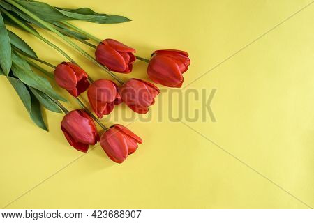 Fresh Red Tulips On Yellow Background, Greeting Bouquet. Top View. Close-up. Copy Space. Selective F