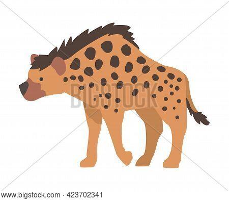 Spotted Hyena African Animal, Wild Predator Jungle Animal Cartoon Vector Illustration Cartoon Vector