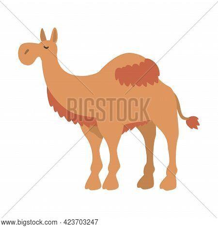 Cute Dromedary African Animal, Camel Herbivore Jungle Animal Cartoon Vector Illustration