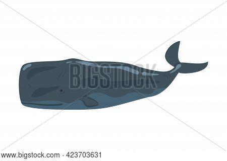Sperm Whale Sea Arctic Animal, Wild Polar Marine Mammal Cartoon Vector Illustration