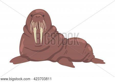 Walrus Arctic Animal, Wild Polar Mammal Cartoon Vector Illustration