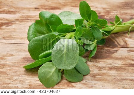 Portulaca Oleracea Or Common Purslane, Also Known As Duckweed, Little Hogweed, Or Pursley. Bunch Of