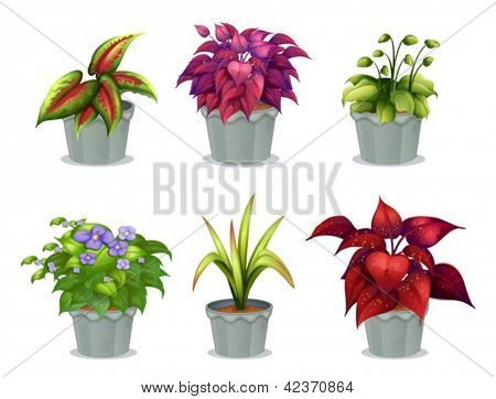 Illustration of six different plants on a white background