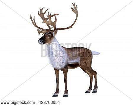 Caribou Buck Walking 3d Illustration - The Caribou Deer Also Called A Reindeer Lives In The Northern