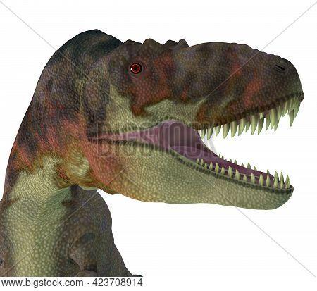 Daspletosaurus Dinosaur Jaws 3d Illustration - Daspletosaurus Was A Carnivorous Theropod Dinosaur Th