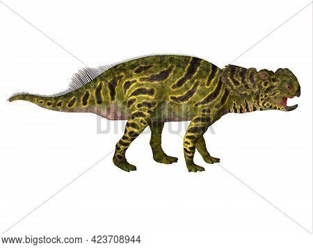 Pachyrhinosaurus Juvenile Dinosaur 3d Illustration - Pachyrhinosaurus Was A Ceratopsian Herbivorous
